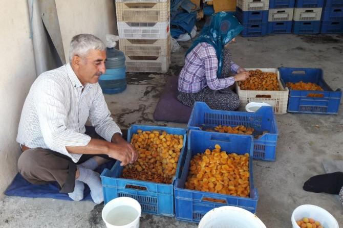 Malatya Darende'de çiftçiler kayısının kurutulma işlemini anlattı