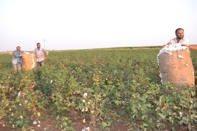 Şanlıurfalı çiftçiler dertli