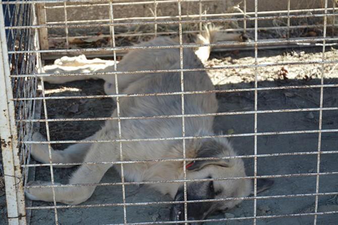Elazığ Palu'da başı boş hayvanlar kısırlaştırılıyor