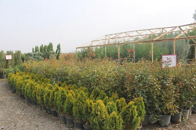 Bismil'de 20 bin çiçek ile 10 bin ağaç ekimi yapılacak
