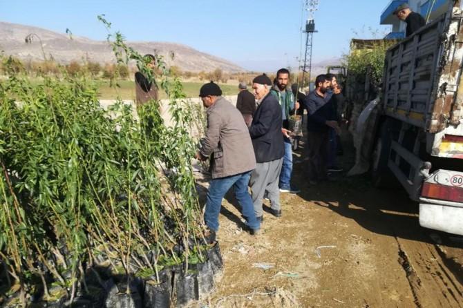 Çiftçilere 11 bin fidan dağıtıldı