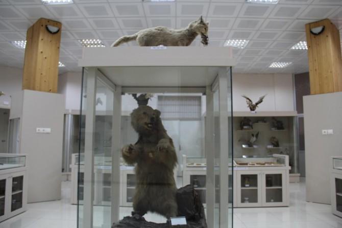 Dicle Üniversitesinde Zooloji Müzesi açıldı
