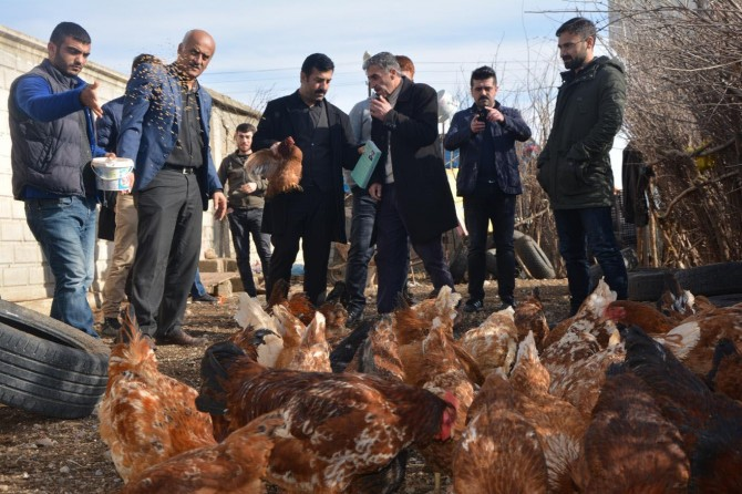 Batman'daki tavuk yetiştiriciliği kursu Karadenizli girişimcinin ilgi odağı oldu
