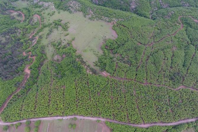 Kastamonu ve Sinop'ta 23 bin 650 dekar ormanlık alanda gençleştirme yapıldı
