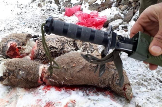 Bingöl'de yaban keçisini avlayanlara 30 bin TL para cezası kesildi