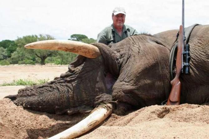 """""""Mozambik'te altı yılda 11 bin fil öldürüldü"""""""