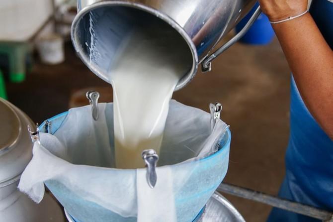 Süt ve süt ürünleri üretimi açıklandı