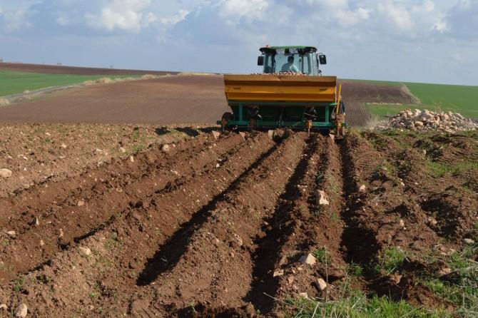 Cipslik patates ekimine başlandı