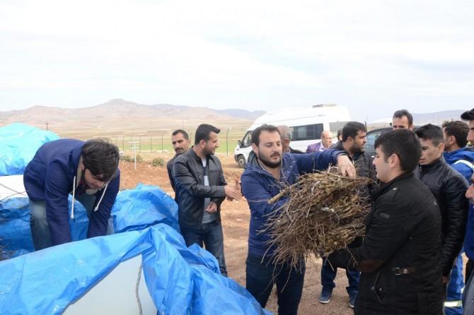 """Çiftçilere """"Mezrone üzümü"""" fidesi dağıtıldı"""