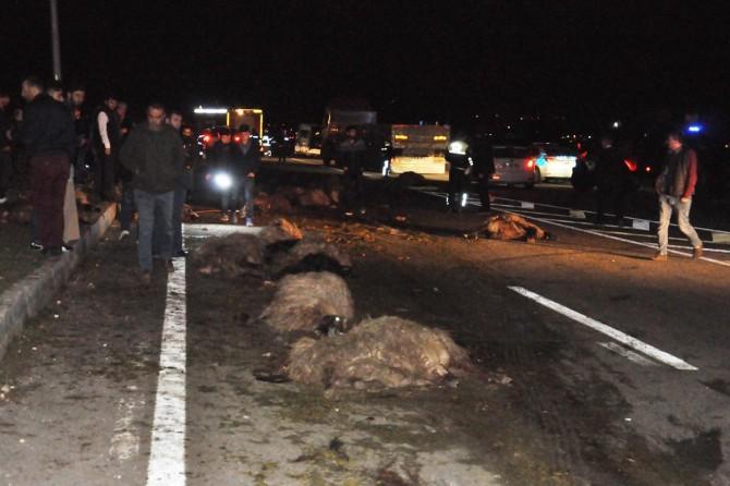 Araçlar sürüye daldı: 42 hayvan telef oldu, 6 kişi yaralandı