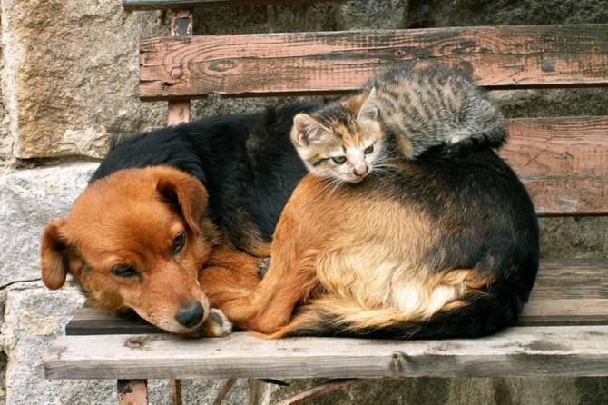 Kedi ve köpeklere kimlik çıkarılıyor