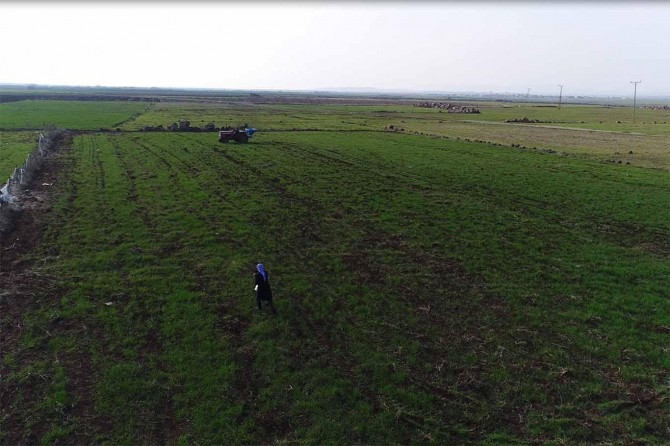 Yağışları fırsat bilen çiftçiler gübre işlemlerine ağırlık verdi