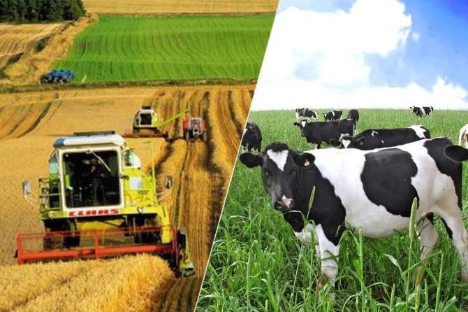 """""""Tarım ve hayvancılığın gelişmesi için ithalat önlenmeli"""""""
