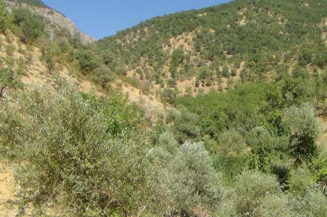 PKK odun kesmeye giden sivilleri taradı: Bir ölü 3 yaralı