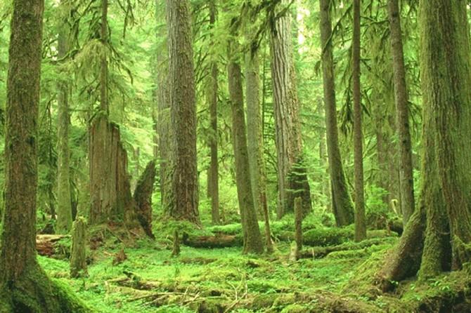 Ormanlık alanlar 22 milyon hektarı geçti
