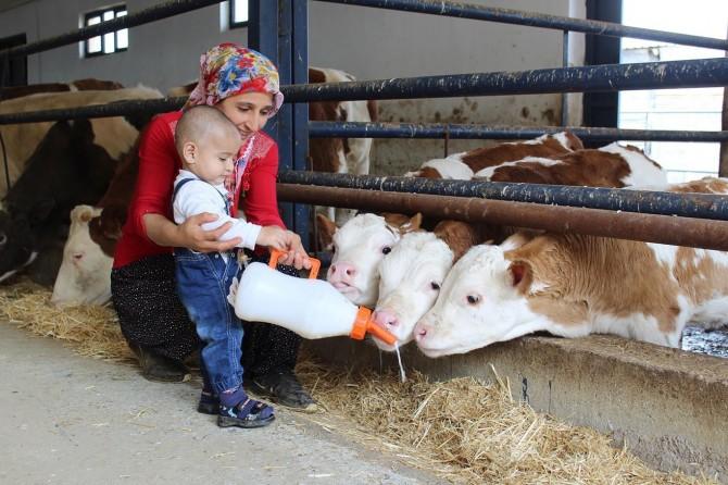 Elazığ Sivrice'de aldığı hibe desteğiyle çiftlik kurdu