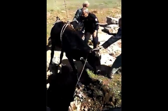 Çukura düşen inek kurtarıldı