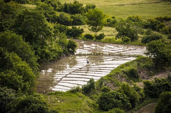 Köyde ürettikleri pirinci sipariş üzeri satıyorlar