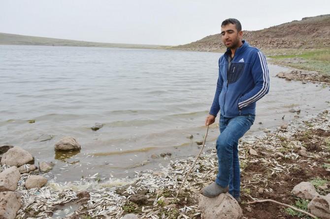 Baraj göletindeki balık ölümleri halkı korkutuyor