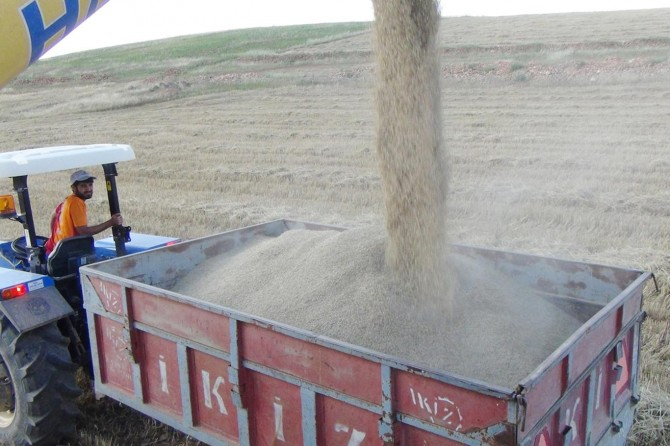 Çınar'da son yağışlar ekinlerde verimi düşürdü