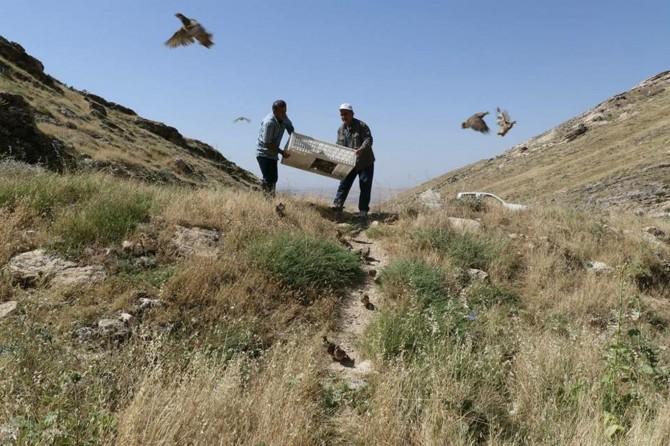 Diyarbakır Silvan'da 500 kınalı keklik doğaya bırakıldı