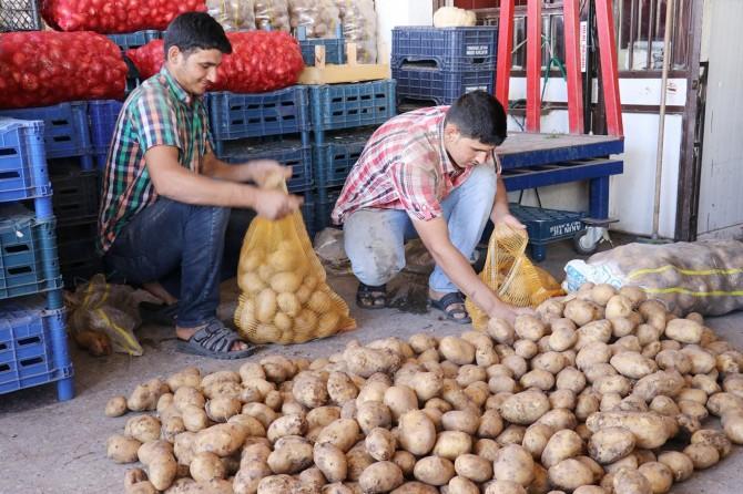Hasadın başlamasıyla patates ve soğan fiyatları düştü