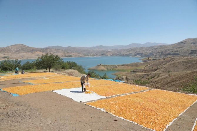Dünya kuru kayısı üretiminin yüzde 85'i Malatya'dan karşılanıyor