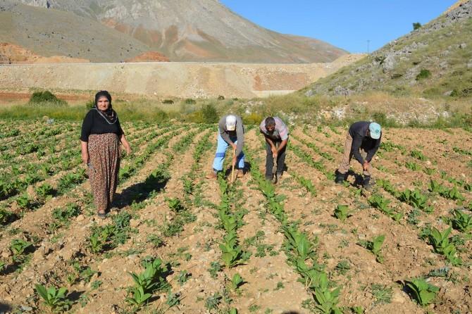 Çiftçi çalışıyor tüccarlar kâr ediyor