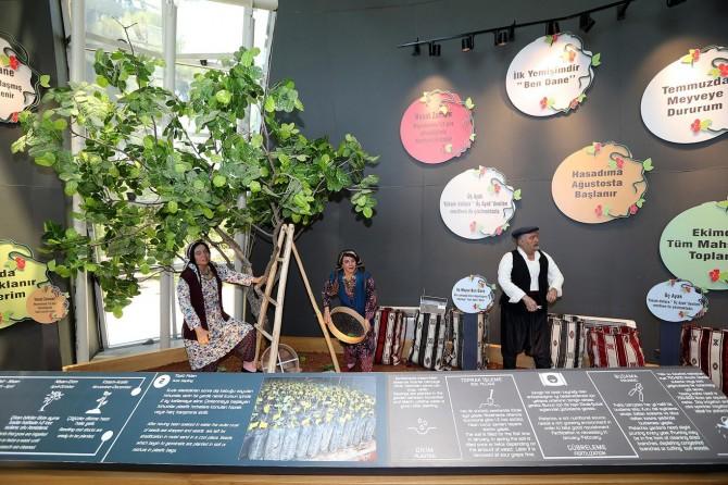 Gaziantep'te antep fıstığı müzesi açılacak