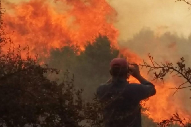 Edirne Meriç'te orman yangını