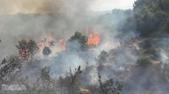 Edirne'de 350 dönüm ormanlık alan küle döndü