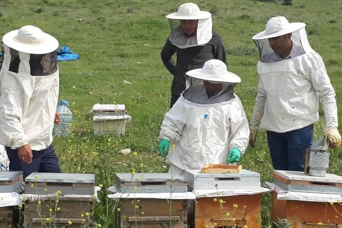 Siirt Şirvan'da arı yetiştiriciliği kursu açıldı
