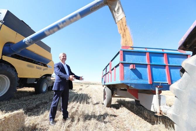 Gaziantep'te buğday hasadı başladı