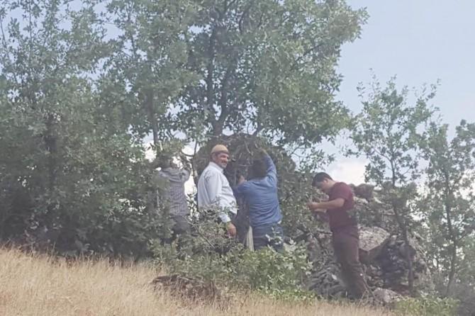 Elazığ Arıcak'ta sakız ağaçlarına antep fıstığı aşısı yapıldı