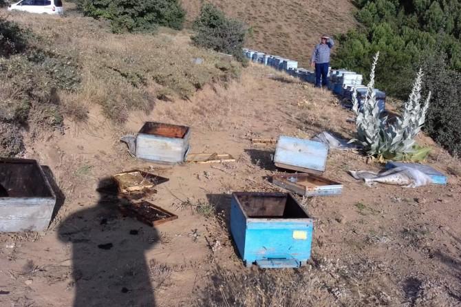 Bingöl Genç'te aç ayı arı kovanlarına zarar verdi