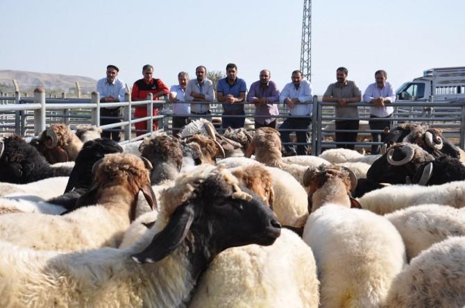 Döviz artışı hayvan satıcılarını da etkiledi