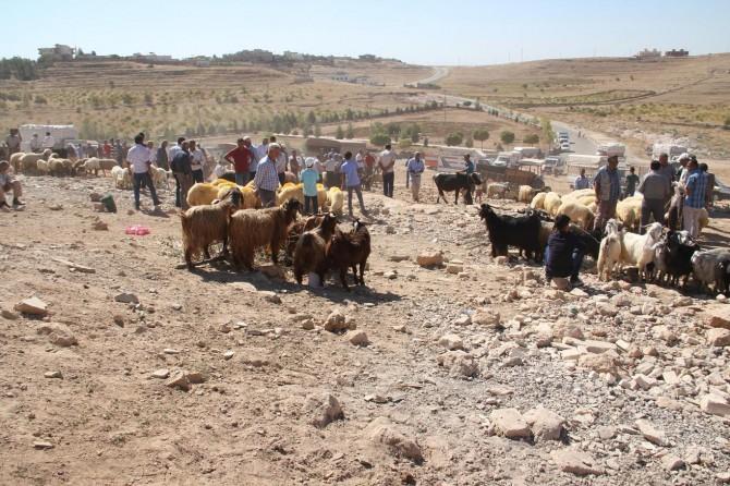 Mardin Midyat'ta hayvan satıcılarından pazar yeri talebi