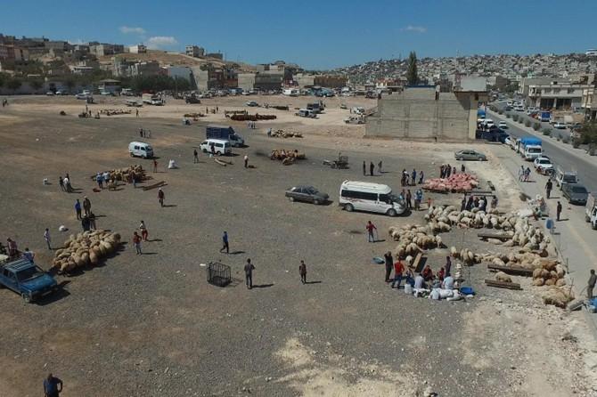 Gaziantep'te kurban satış ve kesim yerleri belirlendi