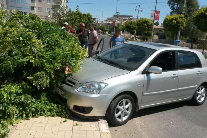 Şanlıurfa Mevlana caddesinde kontrolden çıkan otomobil ağacı yerinden söktü