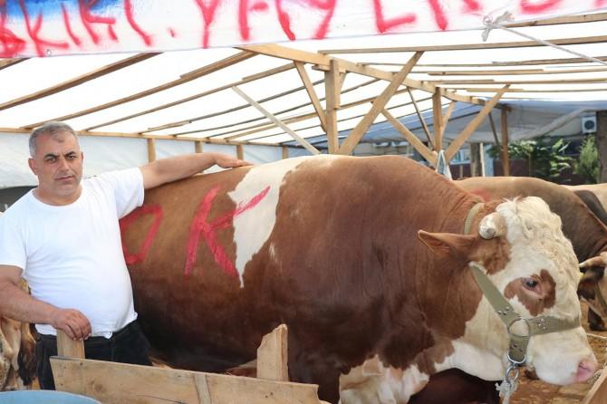 Hayvan yetiştiricileri kurbanlık satışlarından memnun