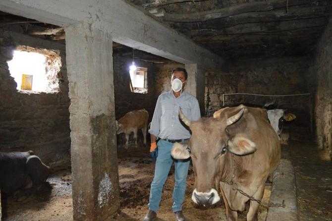 Bitlis Güroymak'ta şarbon nedeniyle hayvanları telef olan belde halkı yardım bekliyor