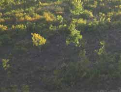 Ağaç Kesmek İçin Ormana Giden Genç Öldürüldü