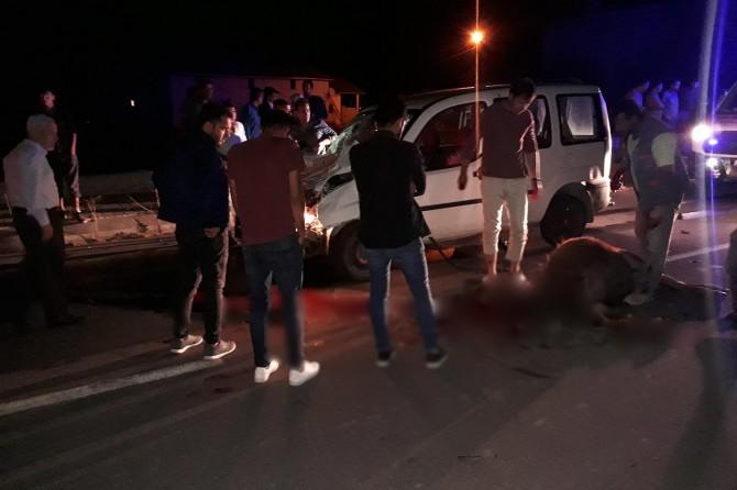 Muş'ta otomobil yola çıkan ineklere çarptı: 2 yaralı