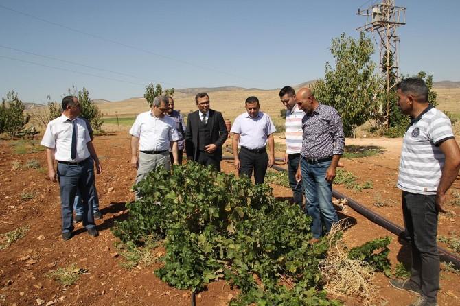 Mardin'de organik tarım yaygınlaşıyor