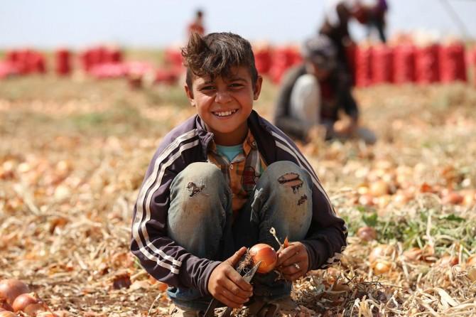 Çınar Karabudak'da soğan toplayarak okul haçlıklarını çıkartıyorlar