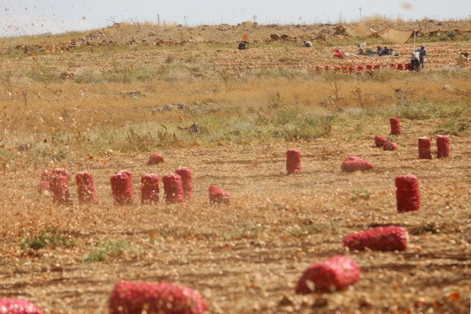 Çınarlı çiftçiler: Kaçak elektrik kullanmayanlar kullananlardan etkileniyor