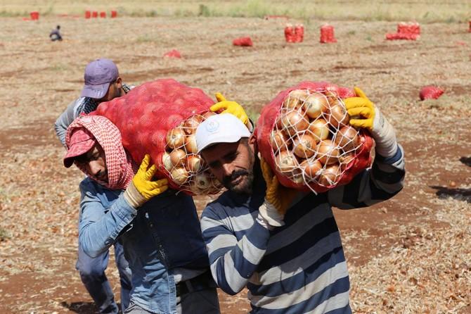 Mevsimlik işçiler: Emeğimizin karşılığını alamıyoruz