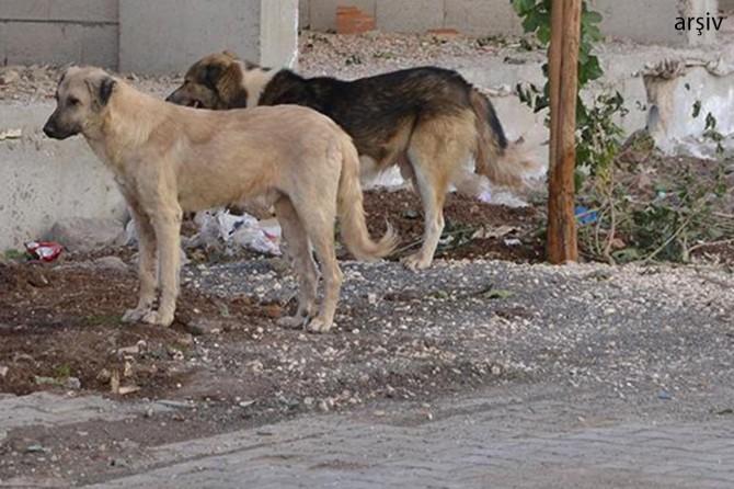 Çınar Ağaçsever'de köpeklerin saldırısına uğrayan çocuk yaralandı