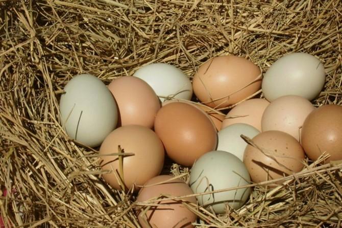Tavuk yumurtası üretimi eylül ayında azaldı