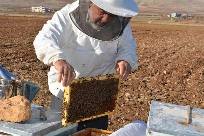 Türkiye genelinde ciddi manada arılar telef oldu